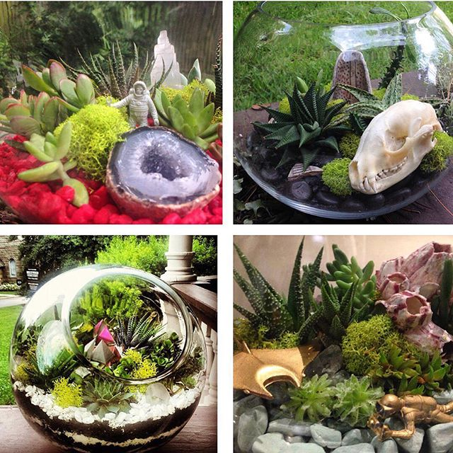 LAST CALL! Gathering supplies to make all of my holiday terrarium commissions to have them finished by this weekend, DM me ASAP if you want to get one! I also have gift certificates available for purchase that can be used toward artwork, terrariums, workshop enrollments and custom commissions ✨ My next succulent workshops will be in late January/early February at CoRK🍃🌸🍃 Thanks for the continued support! 🎁🎄🎁