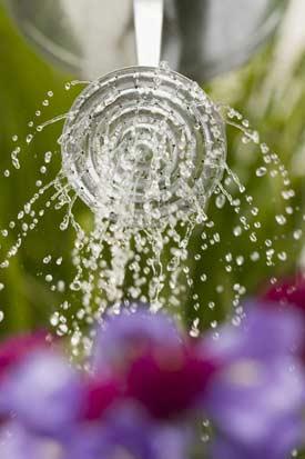 june09-watering-flowers.jpg
