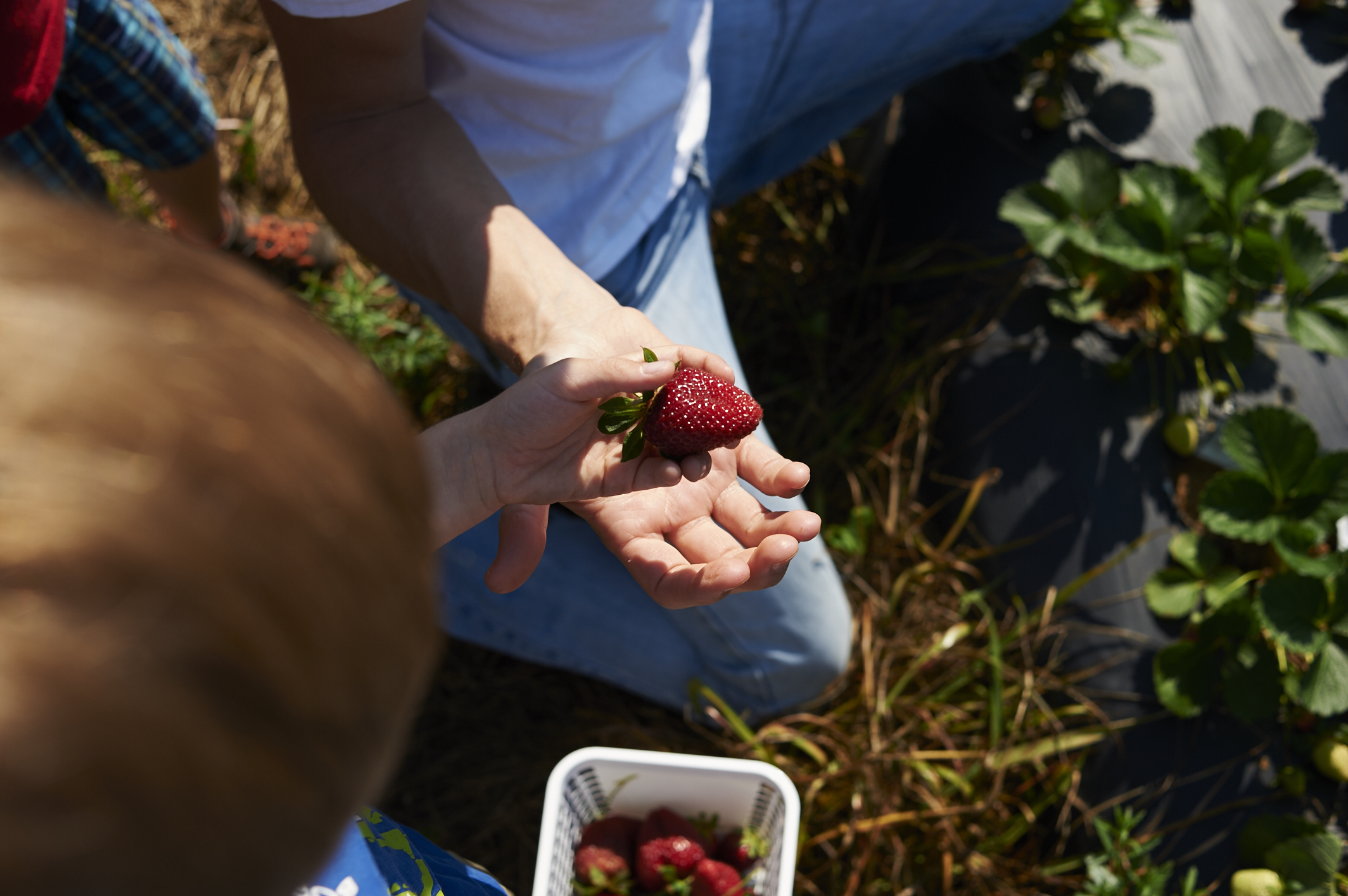 its the everyday photography: strawberry picking and country living