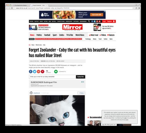 Meet Coby The Cat — Rebecca Schefkind