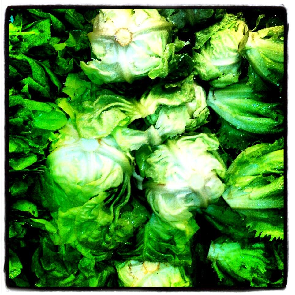 Boston Bibb Lettuce
