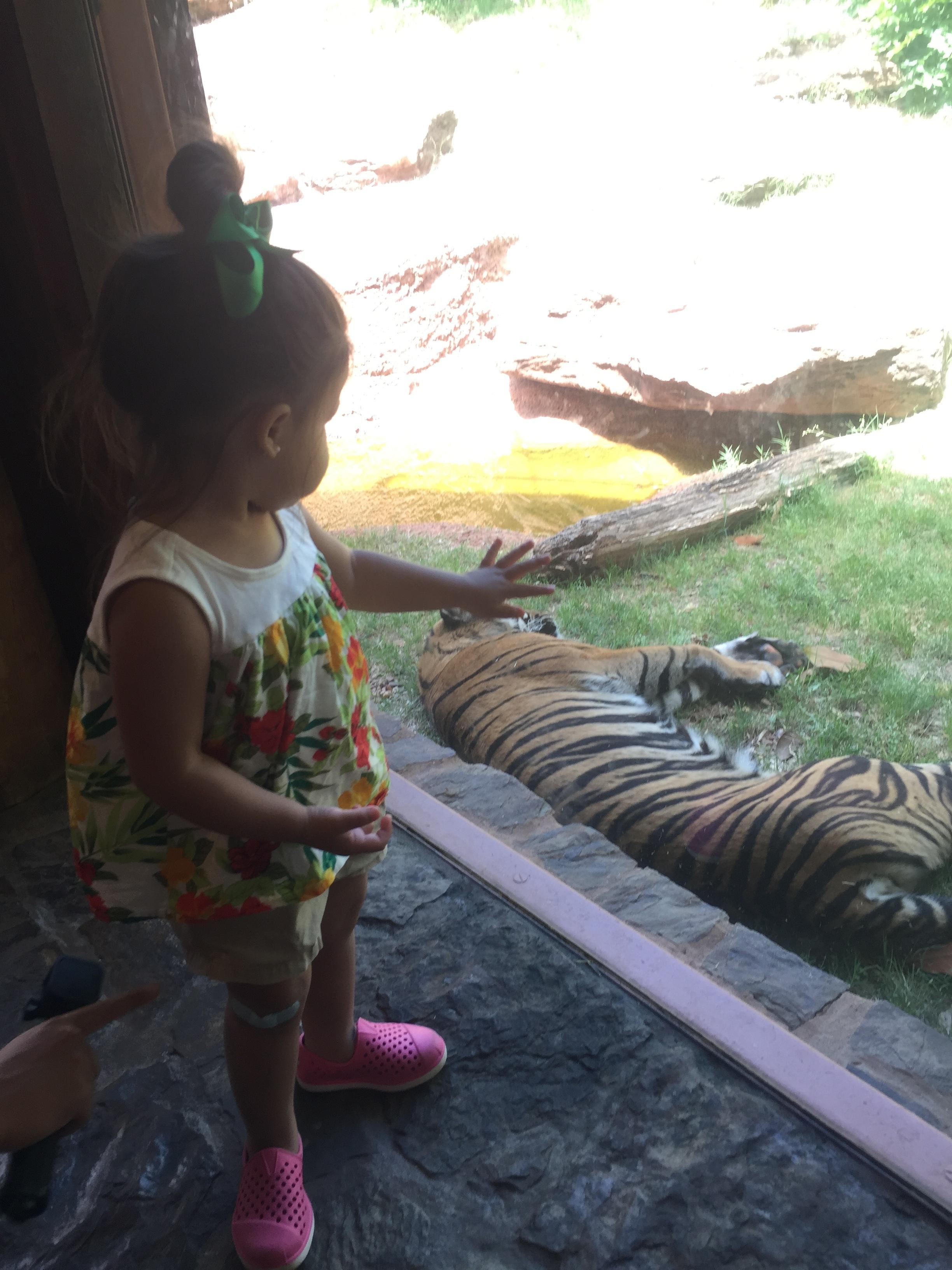 a tiger!
