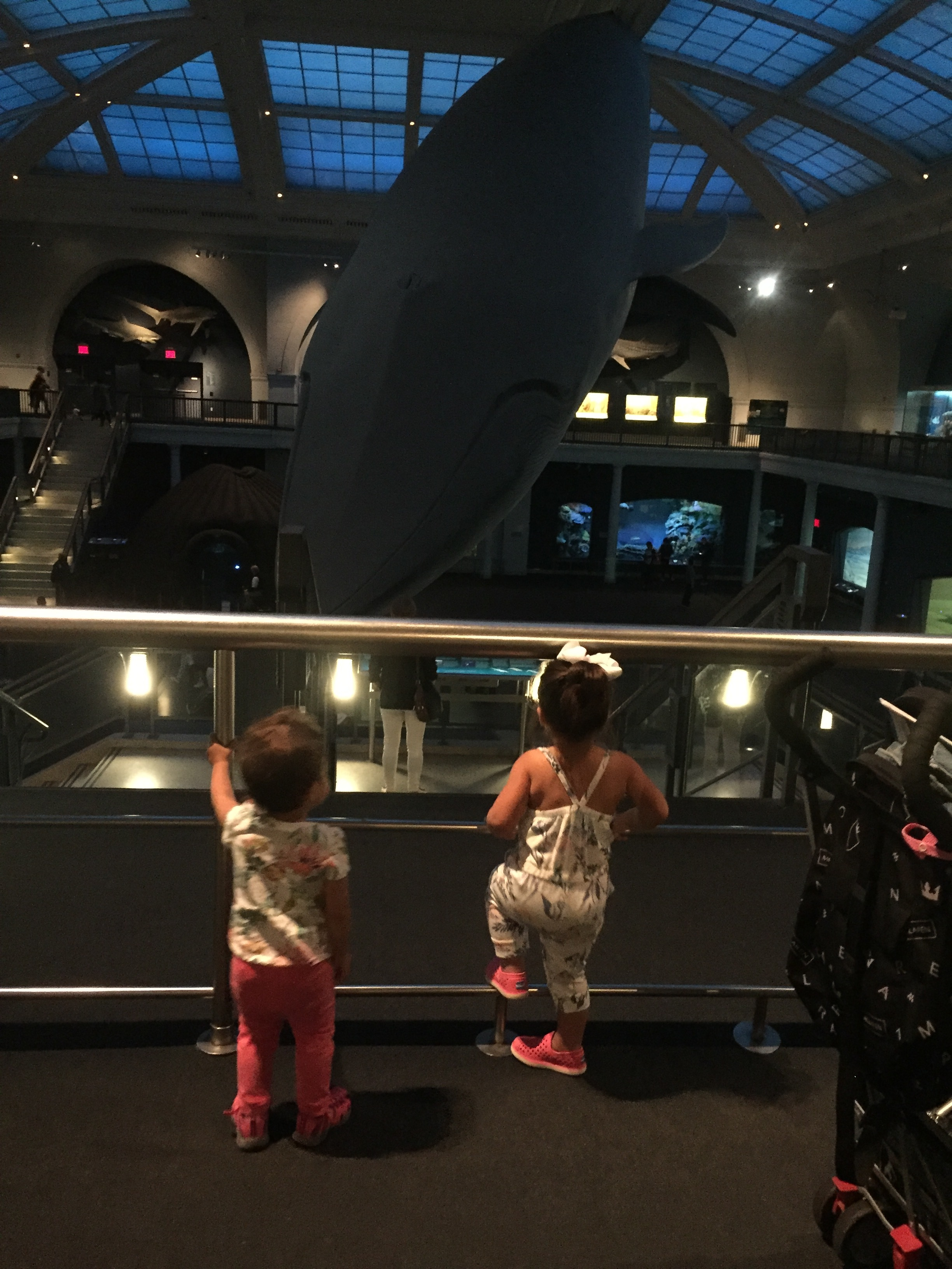 AMNH with friends!