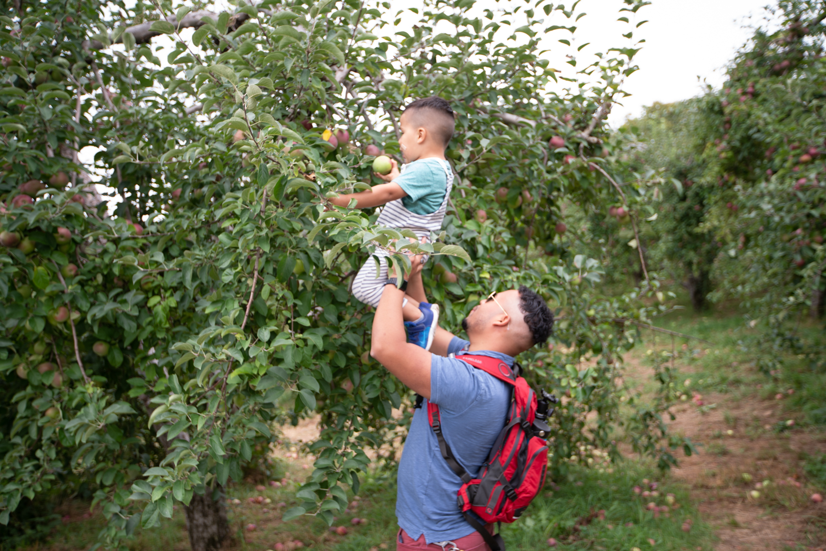 applepicking2018-51.JPG