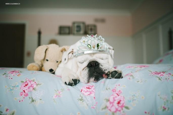 Girl-and-Her-Bulldog13-685x456.jpg
