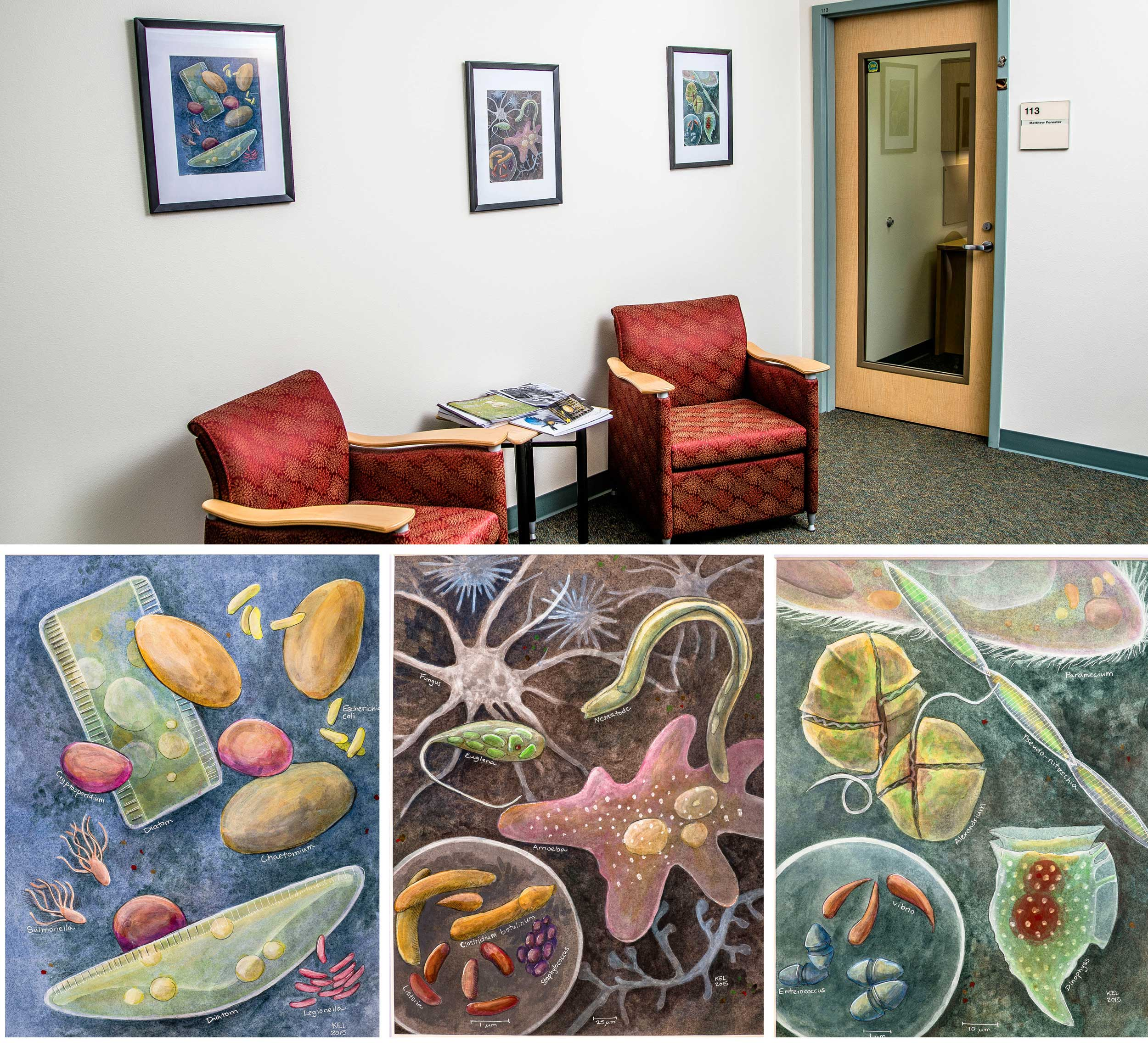 The World of Microbes, paintings for the DEC Lab in Anchorage.  Photography by Michael Conti