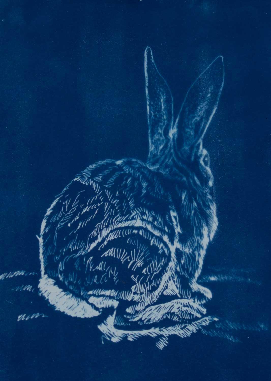 JT_rabbit.jpg