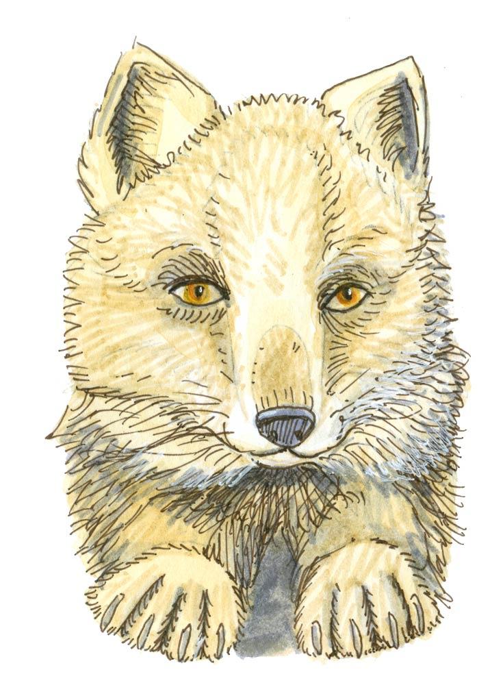 2016_Fox_1.jpg