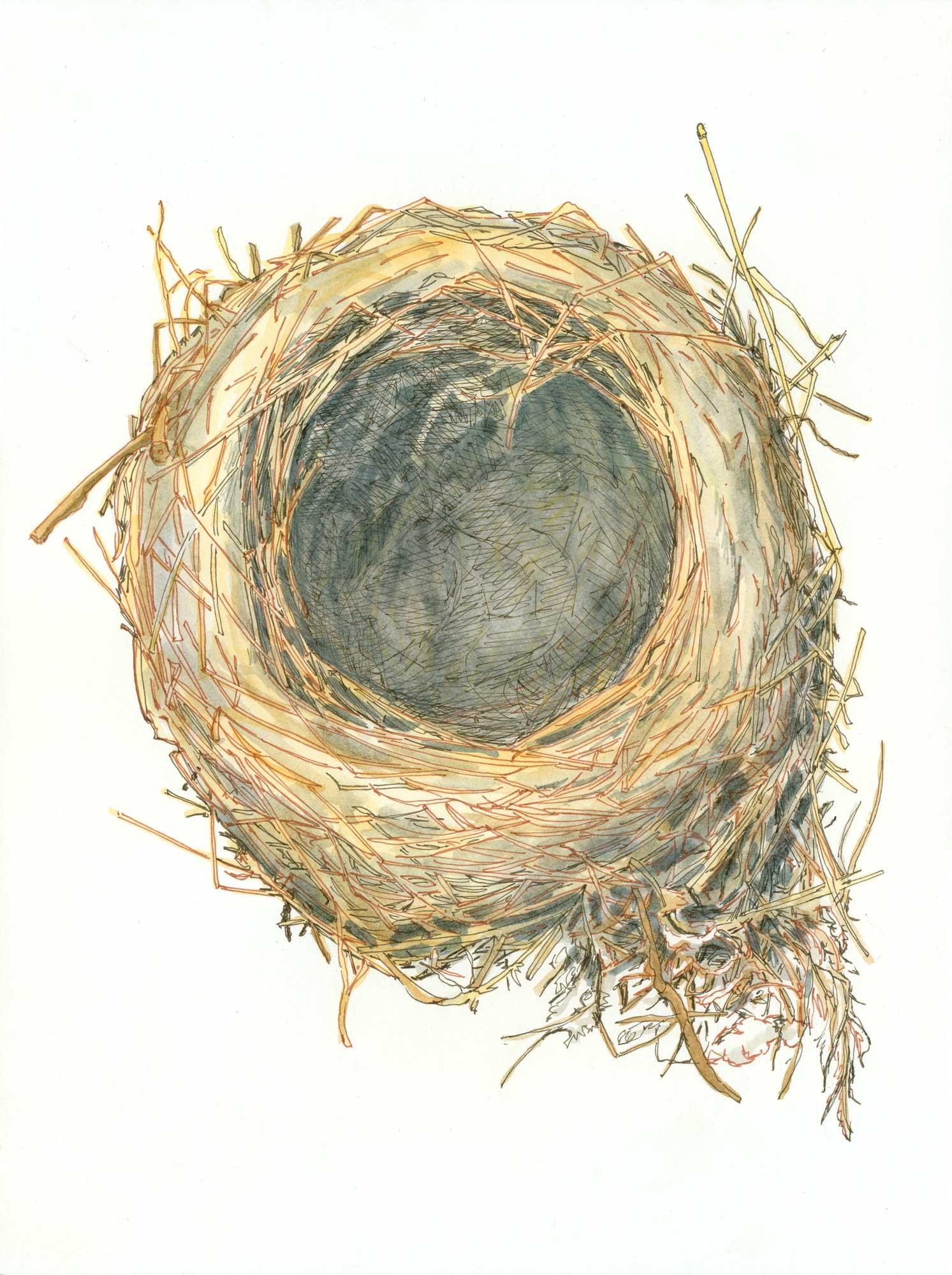 PON_Empty_Nest.jpg