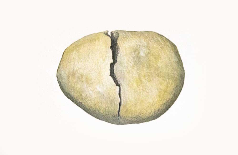 Rock_Broken.jpg