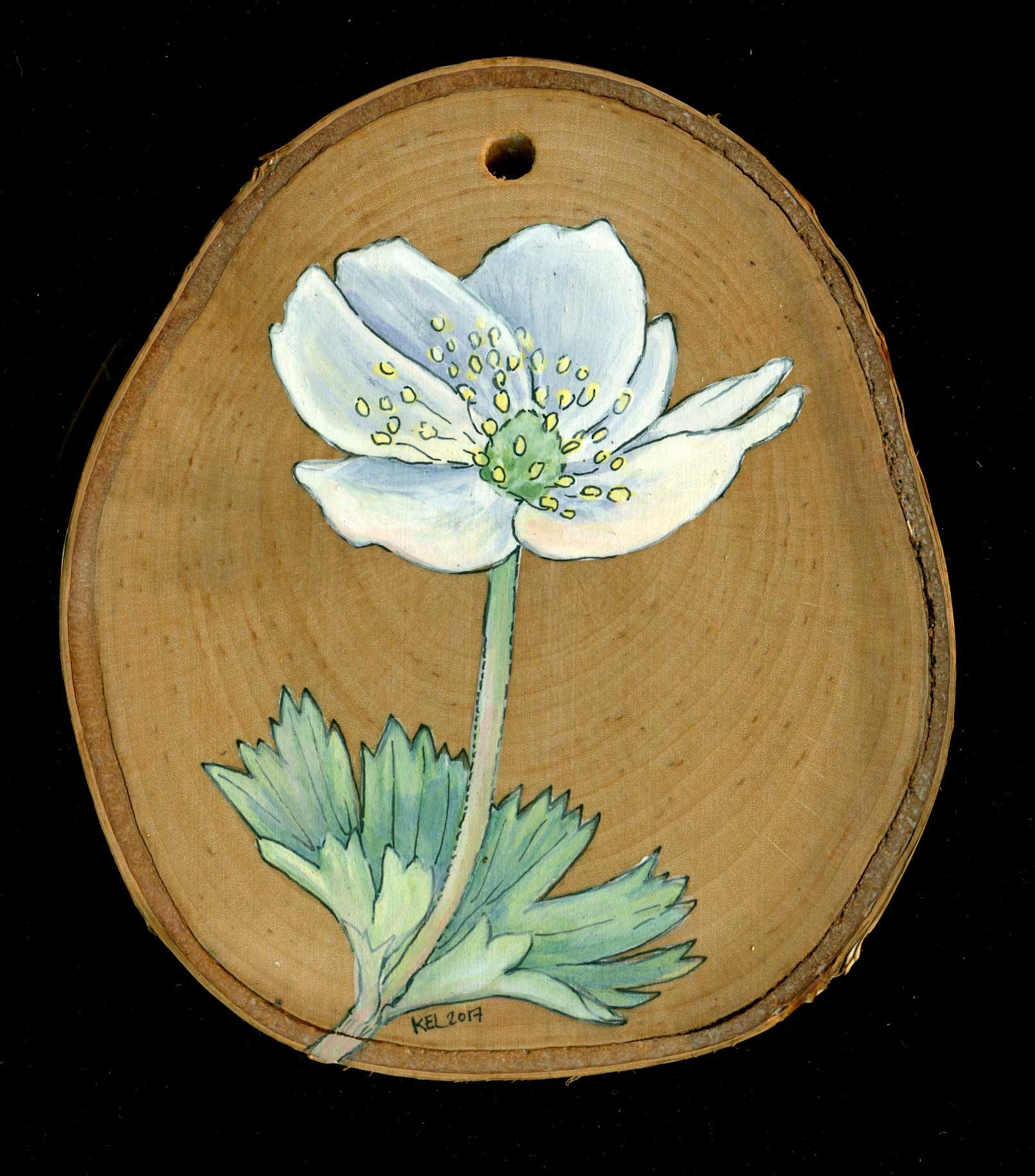 wood_anemone.jpg
