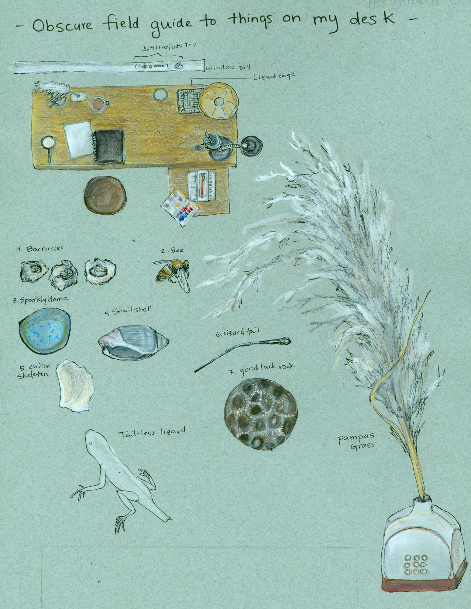 Obscure field guide to things on my desk, from 2009, when I was doing my Certificate in Science Illustration at CSUMB.