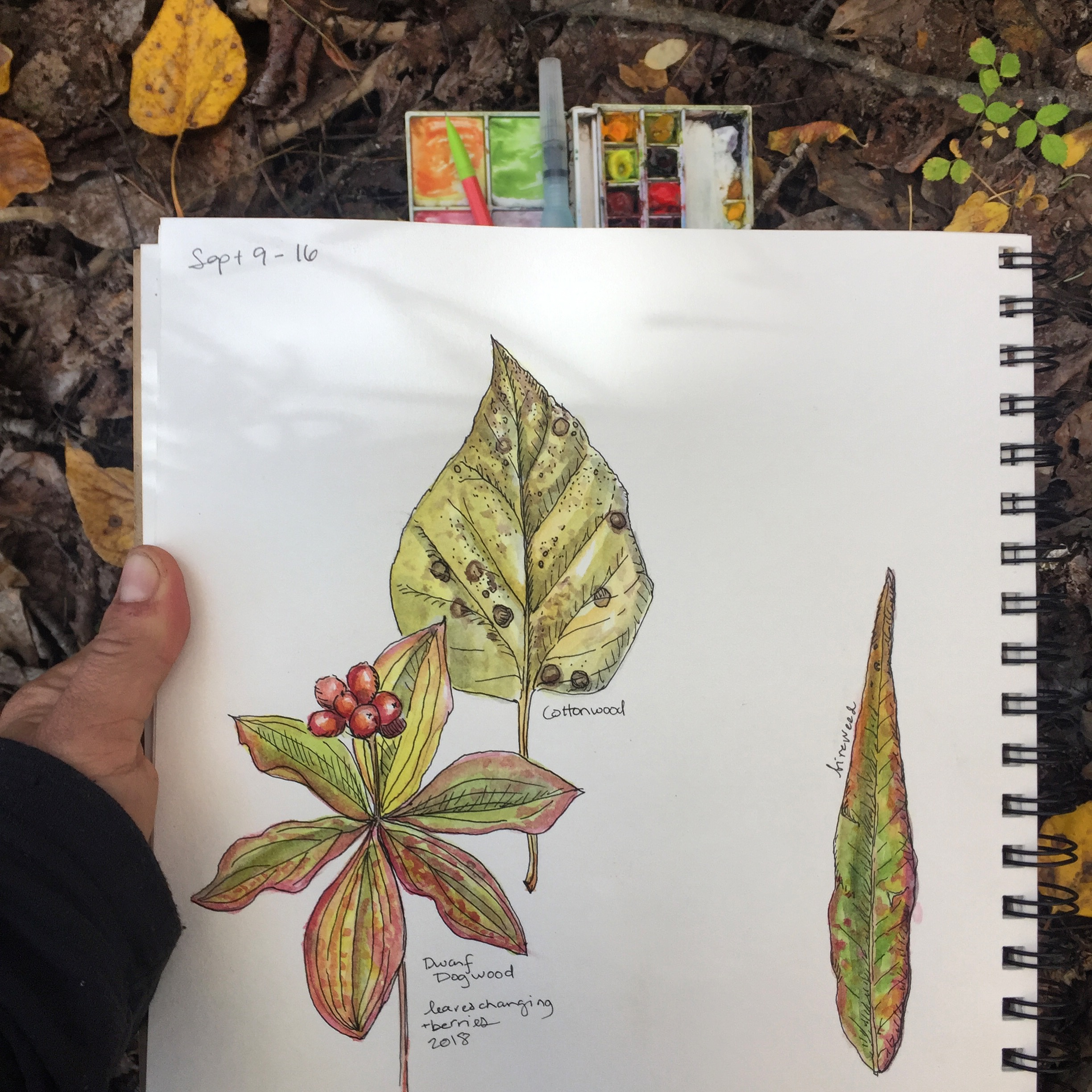 A page from my nature journal/ sketchbook