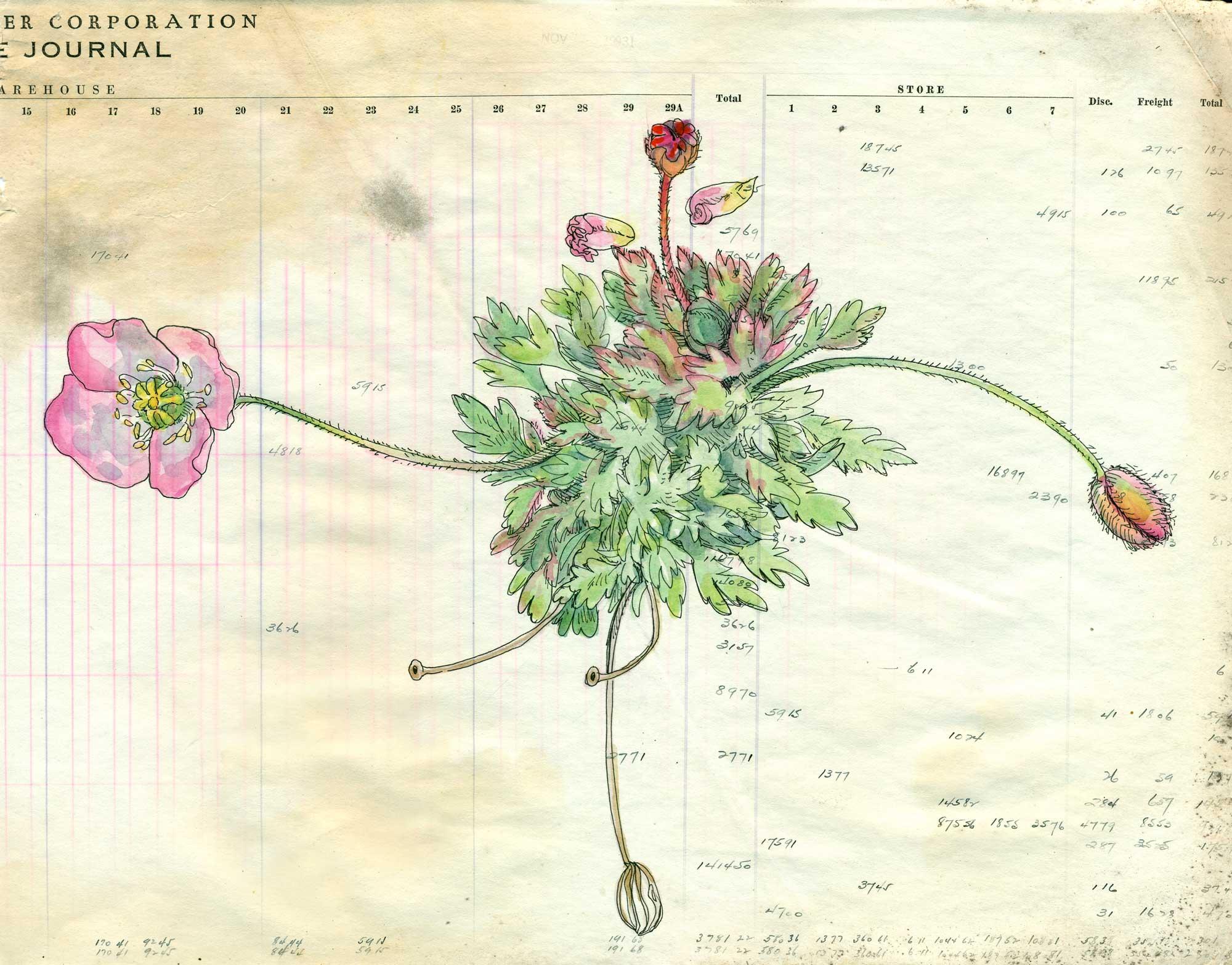 Poppies2_W.jpg