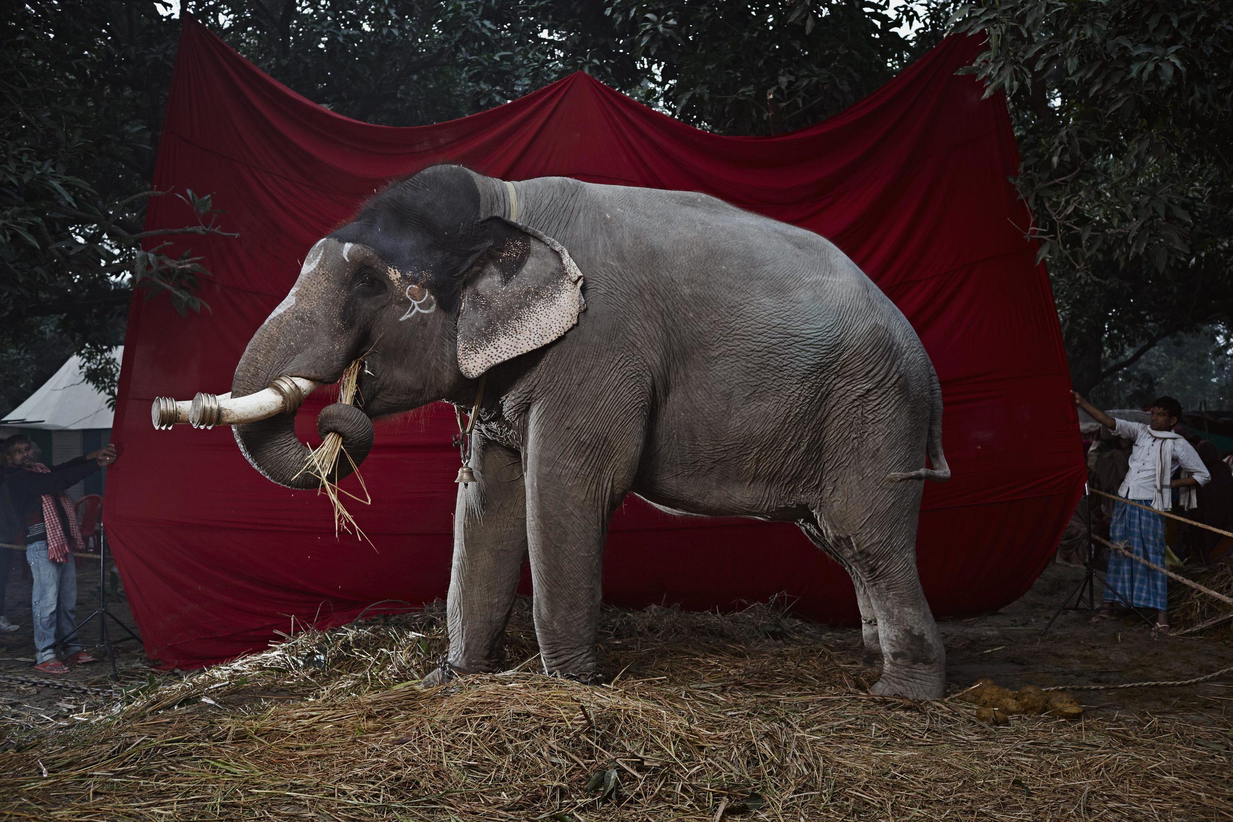 Elephant_2_4_B6C7005.jpg
