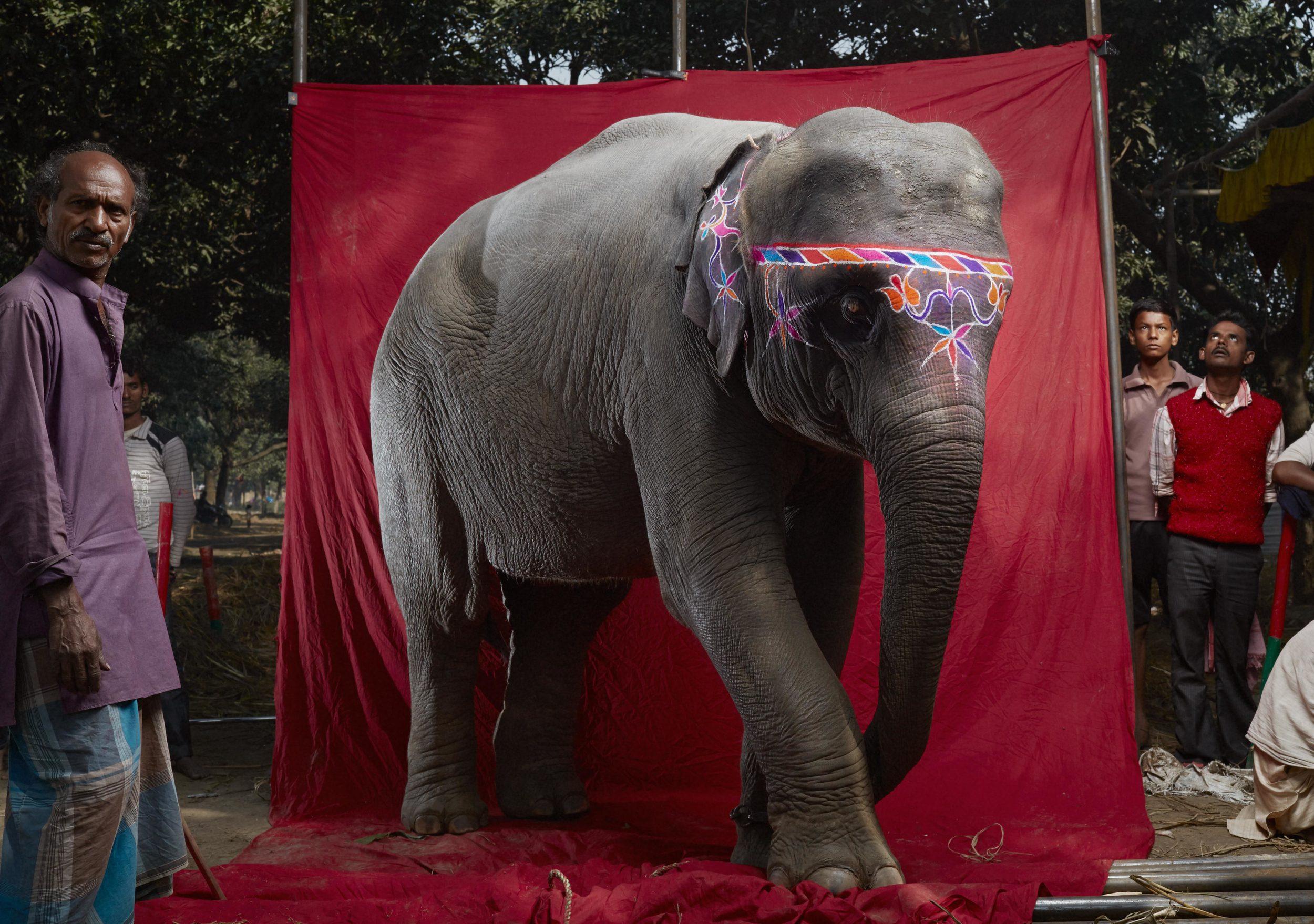 Elephant_5_1_B6C9957.jpg