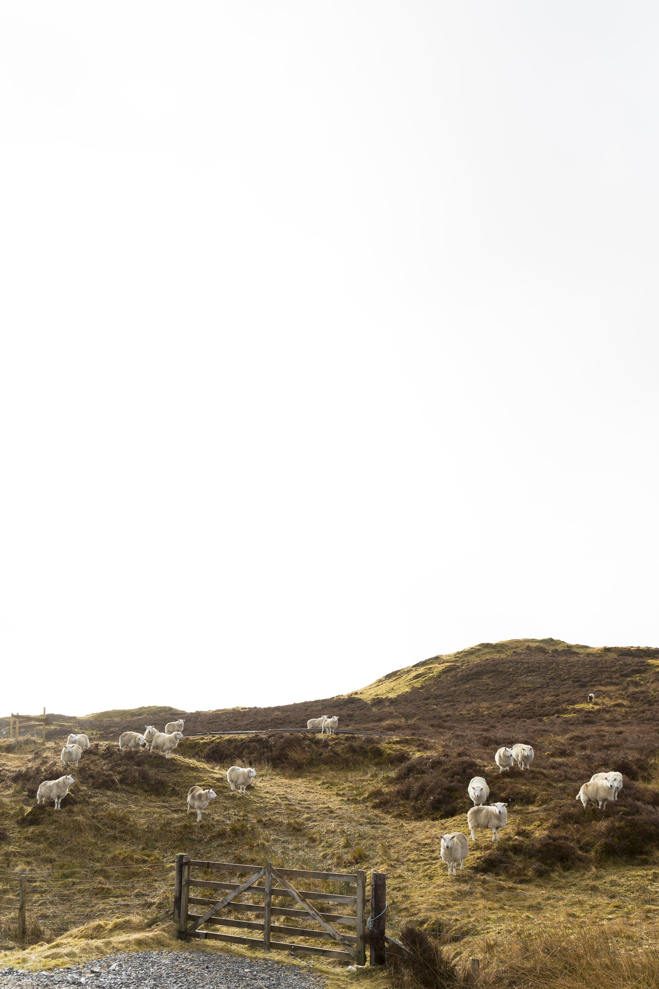 scotland_mar_2017-552.jpg