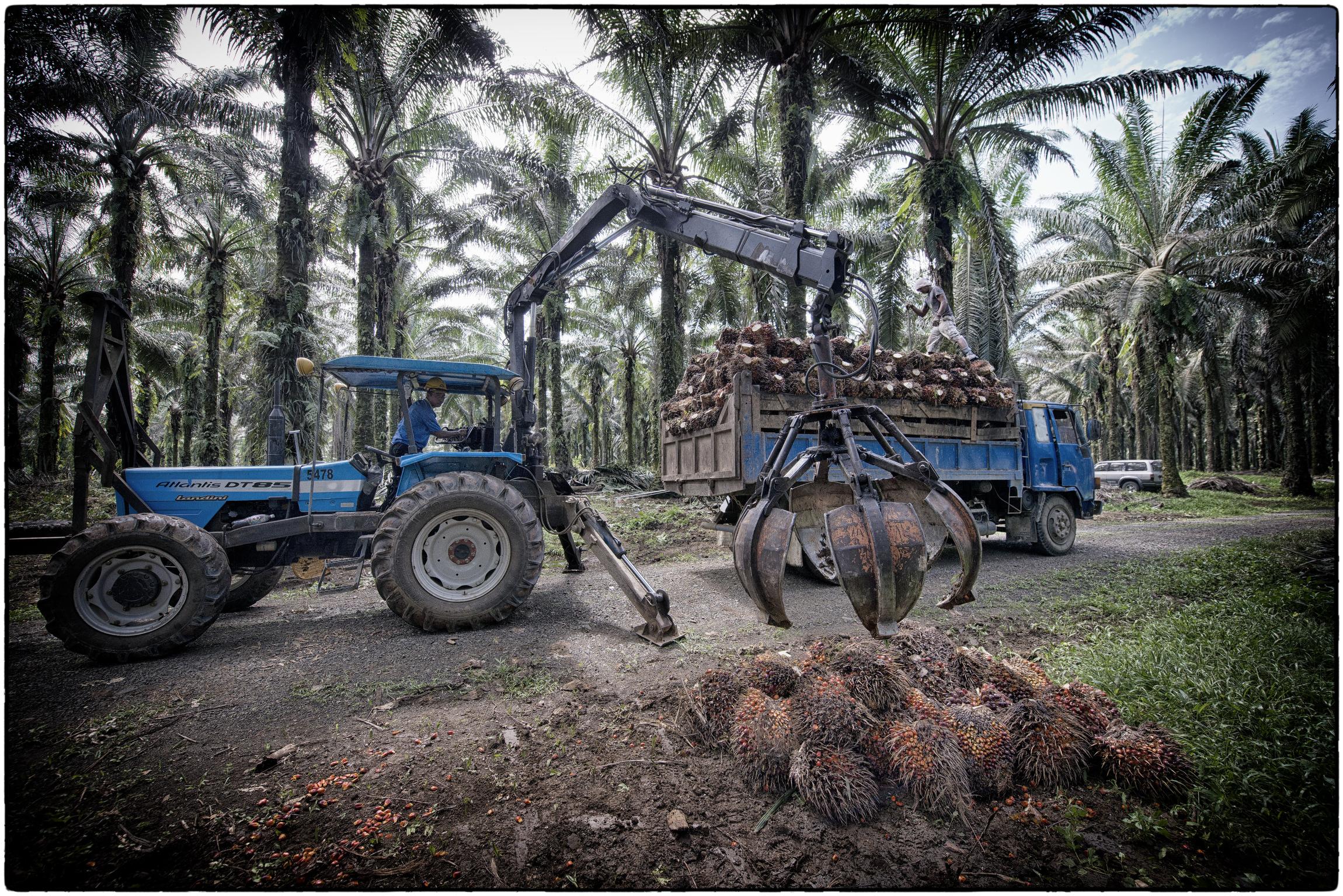 Harvesting20.JPG