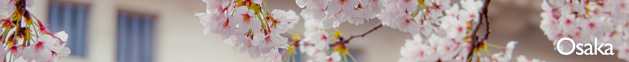 Osaka+Sakura.jpeg