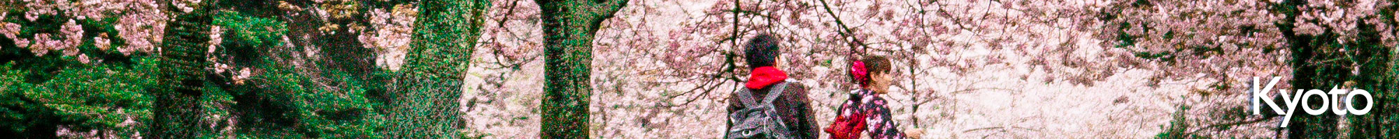 Kyoto+Sakura.jpeg