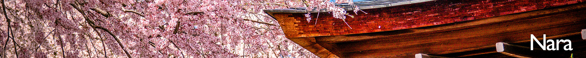 Nara+Sakura.jpeg