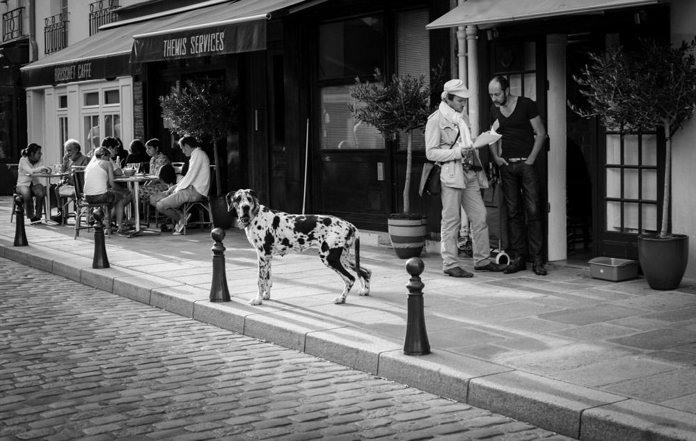 ©Valérie Jardin - street dogs-2.jpg