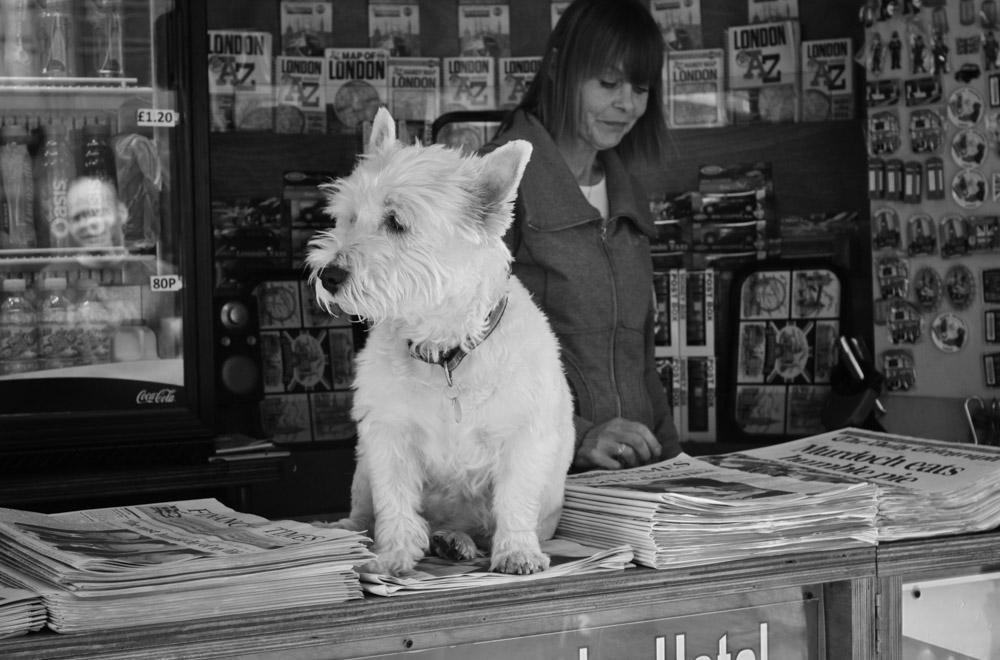 ©Valérie Jardin - street dogs-3.jpg