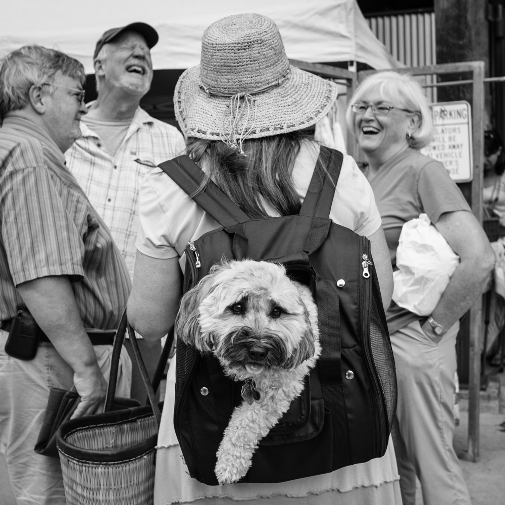 ©Valérie Jardin - street dogs-5.jpg