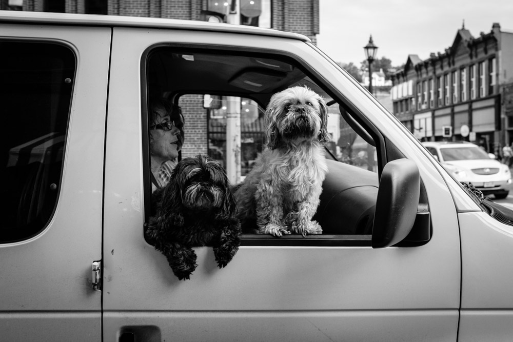 ©Valérie Jardin - street dogs-16.jpg