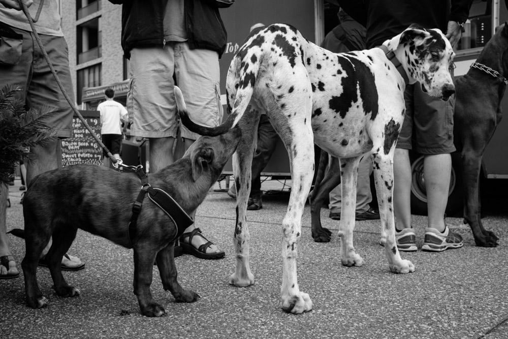 ©Valérie Jardin - street dogs-17.jpg
