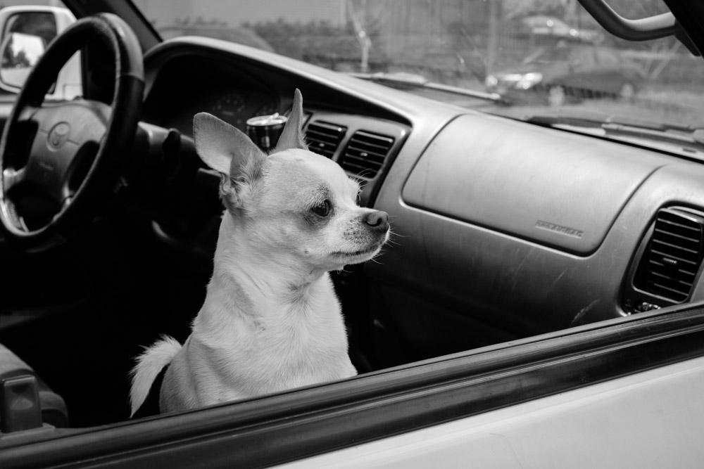 ©Valérie Jardin - street dogs-18.jpg