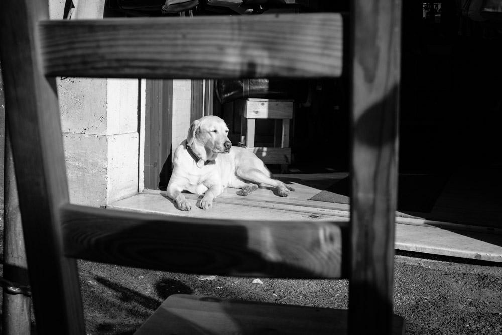 ©Valérie Jardin - street dogs-20.jpg
