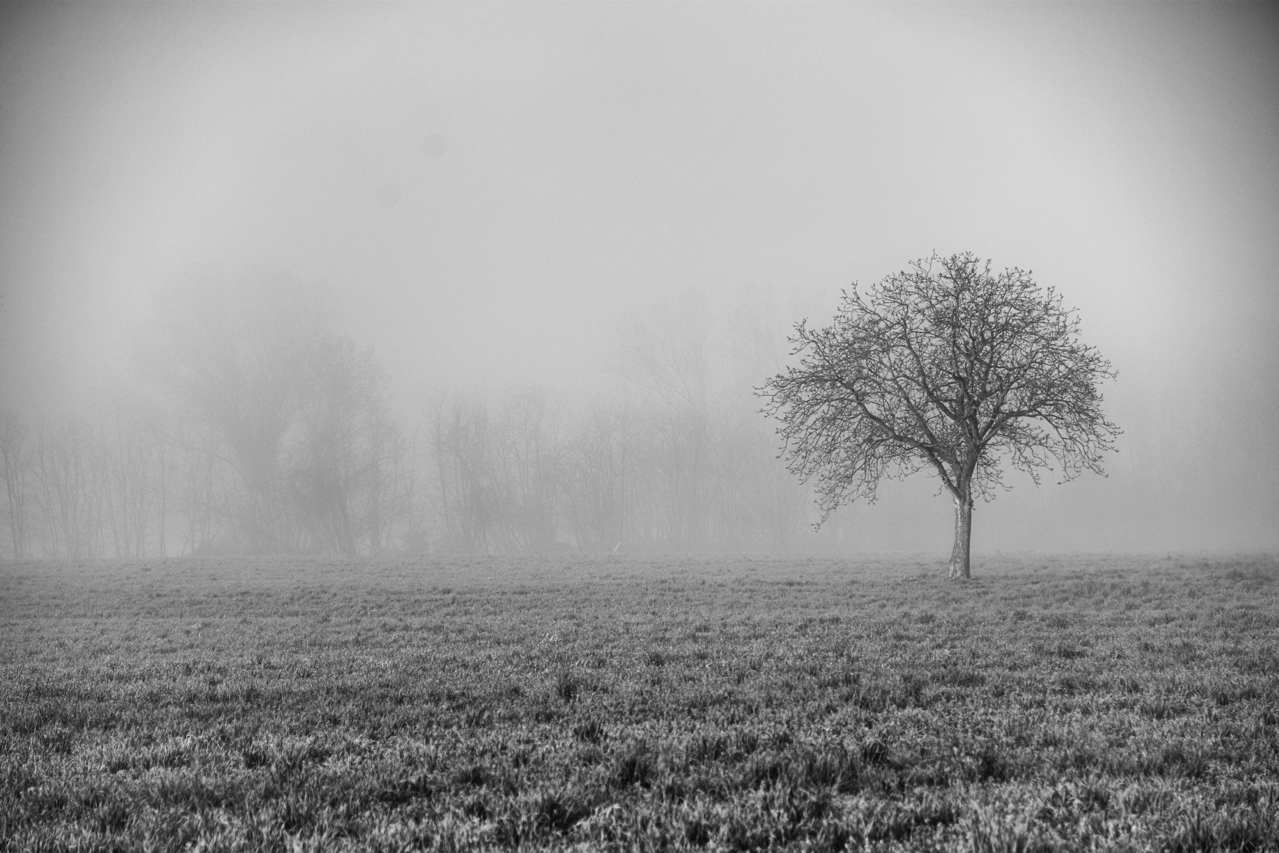 Lone Tree in Morning Mist - Tuscany, Italy - Copyright 2014 Ralph Velasco.jpg