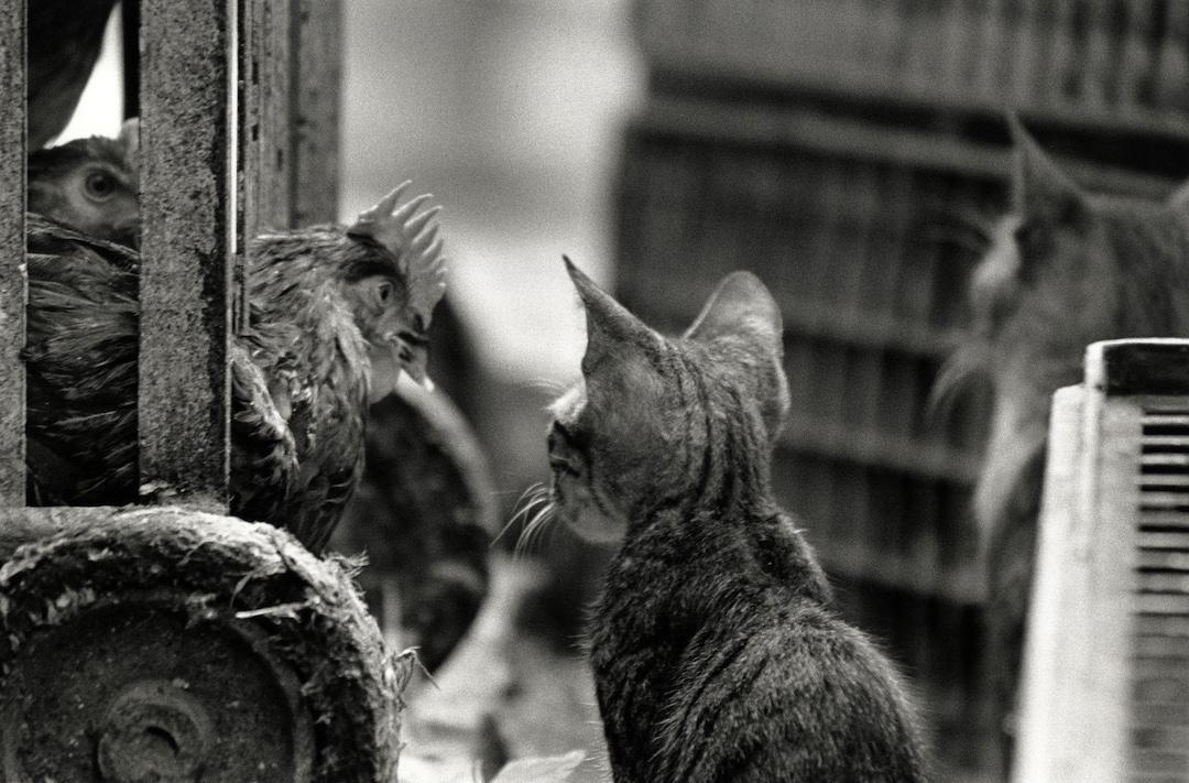 walter_rothwell_hts_cats_02.jpg