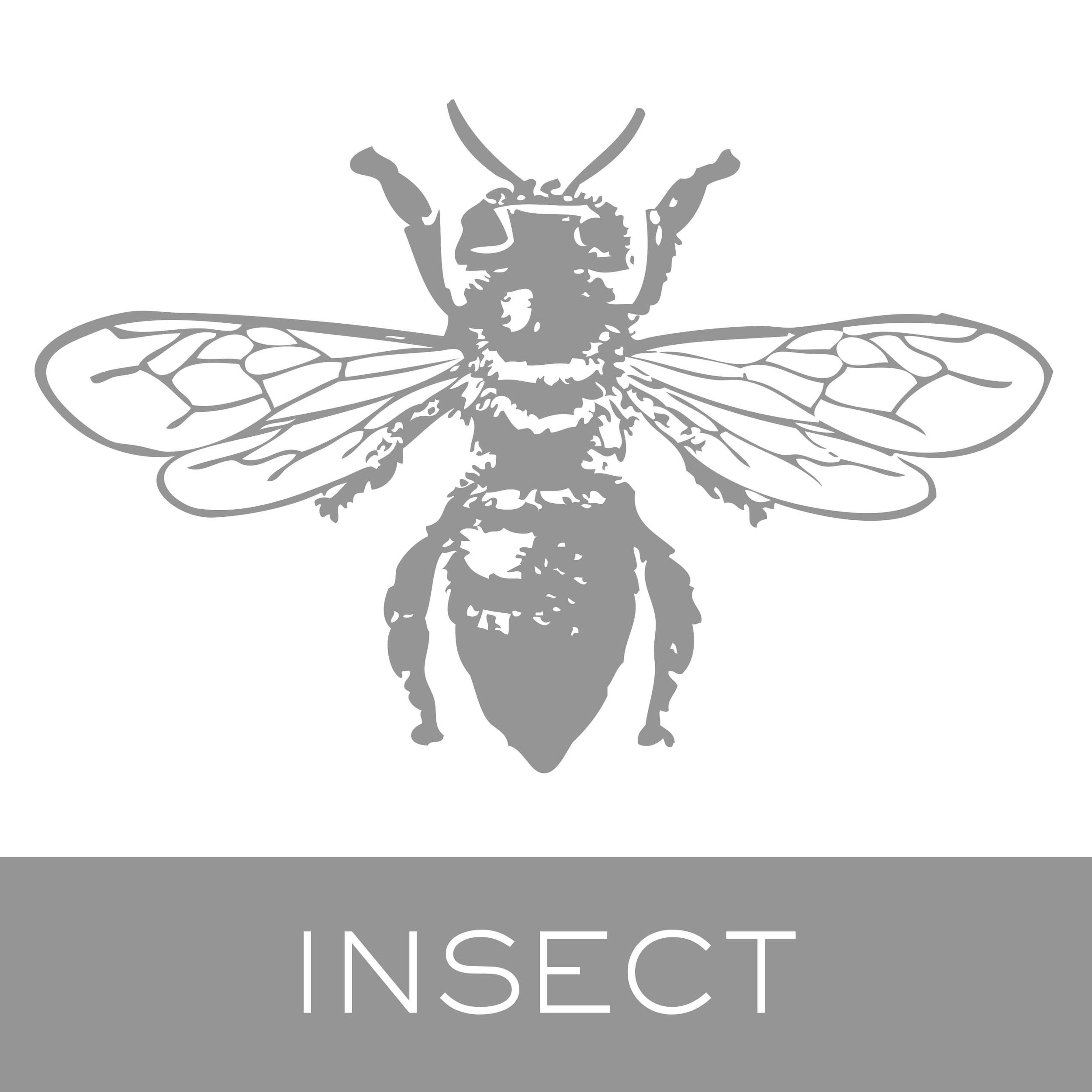 insect.jpg