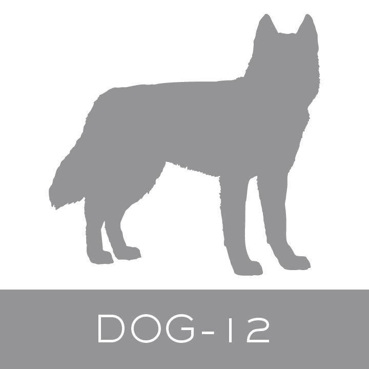dog-12.jpg