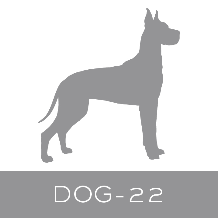 dog-22.jpg