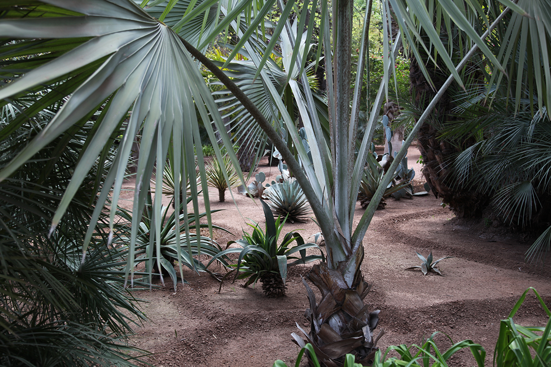 Jardin Majorelle   Click to see more in projects