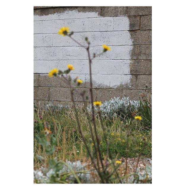 #wasteland #flora