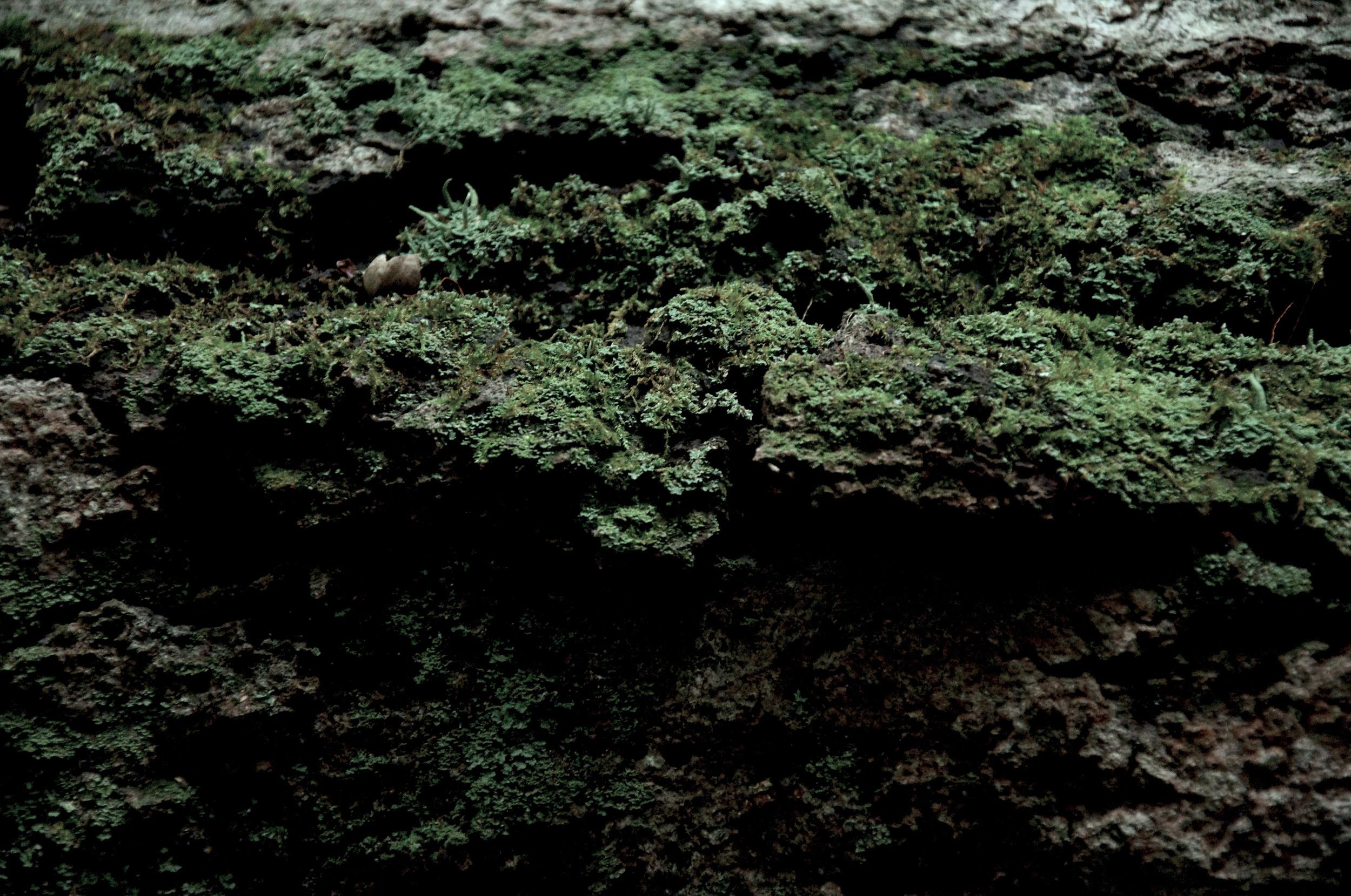 Ruins Trail Export 15.jpg