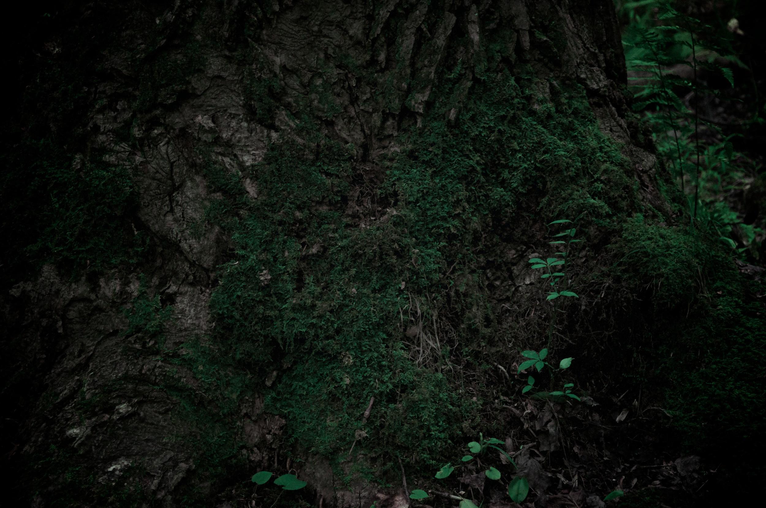 Ruins Trail Export 18.jpg