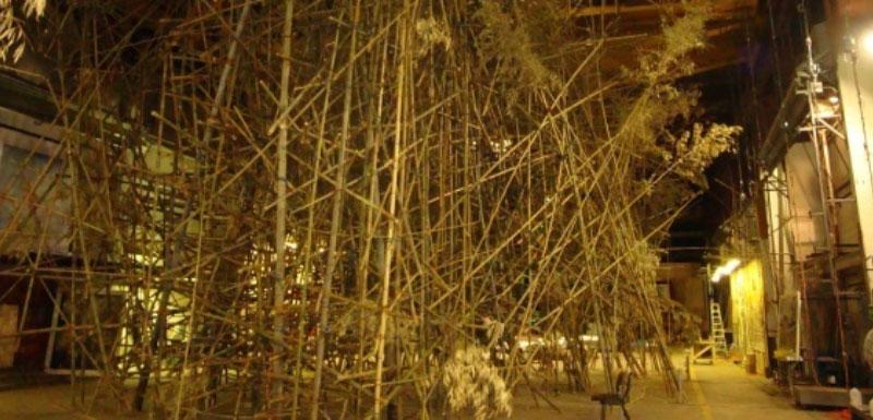 bambu_lrg.jpg