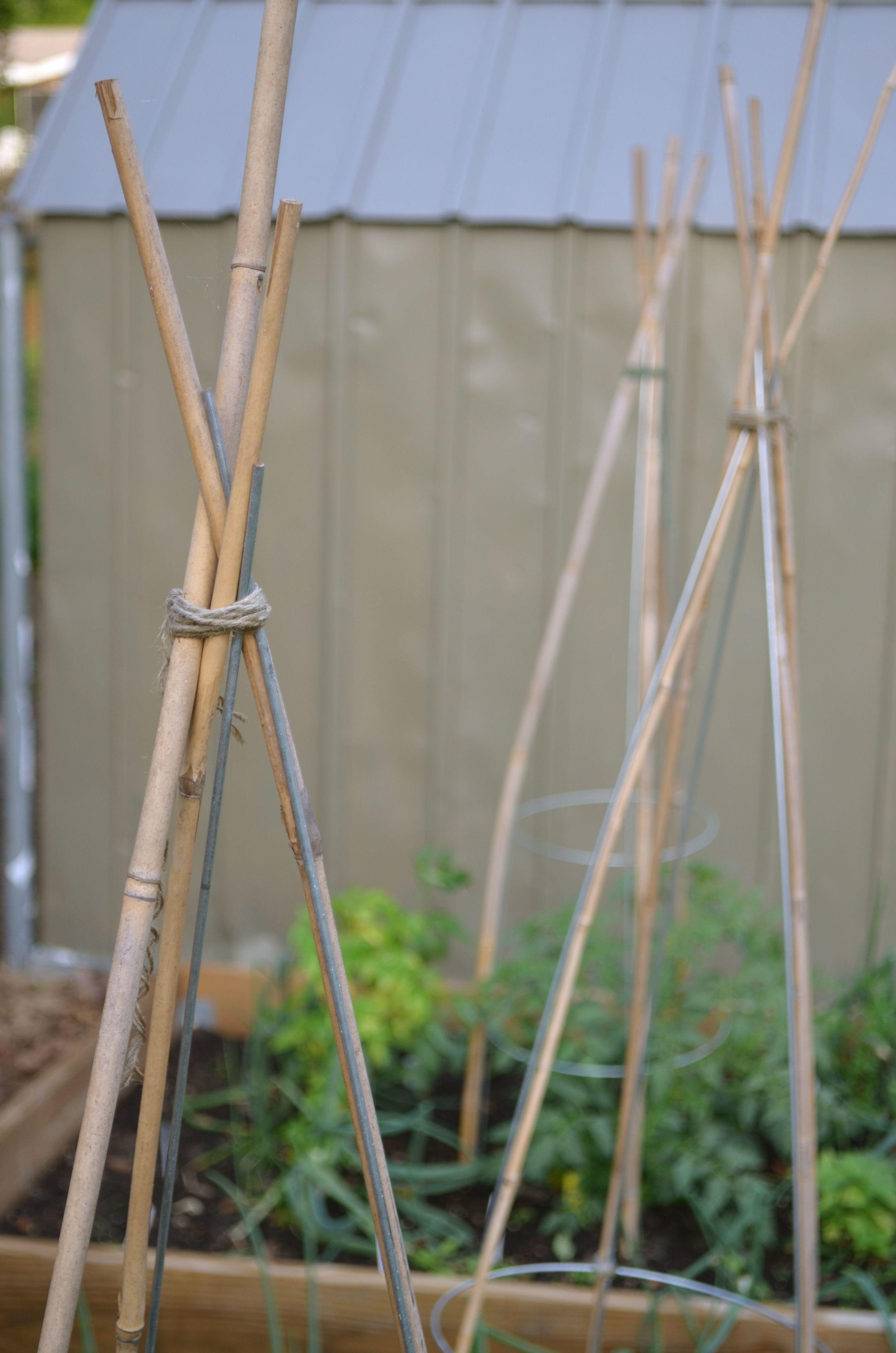 bamboo trellis