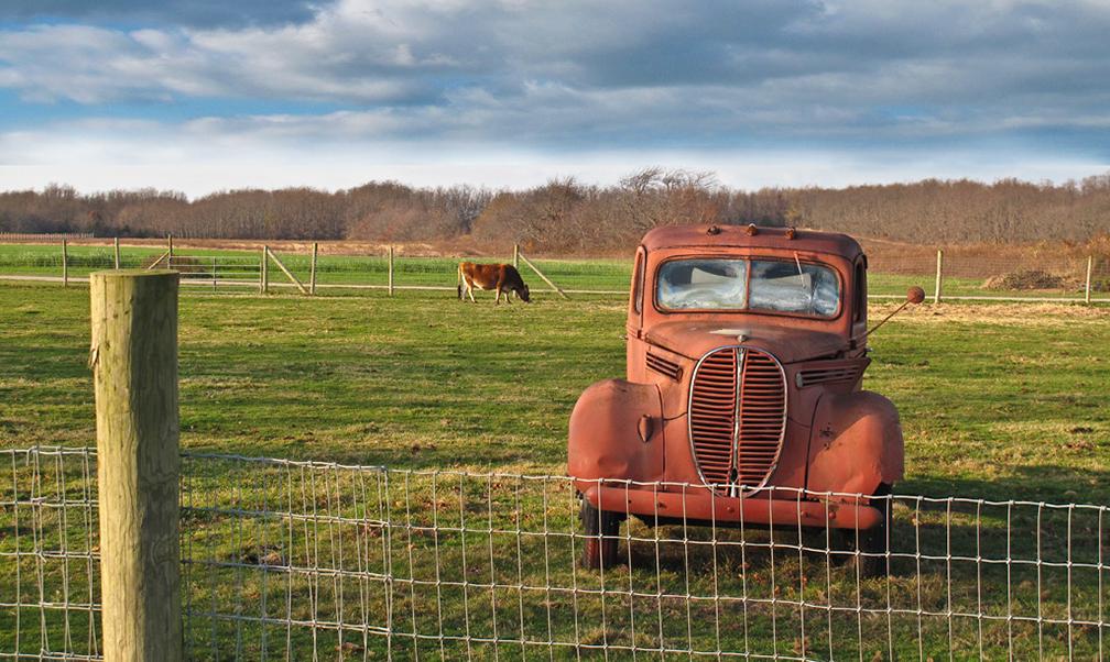 Truck-&-Cow-on-Farm.jpg