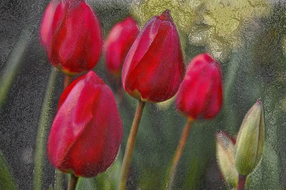 Monet Crosshatch and ChromeTulips copy.jpg