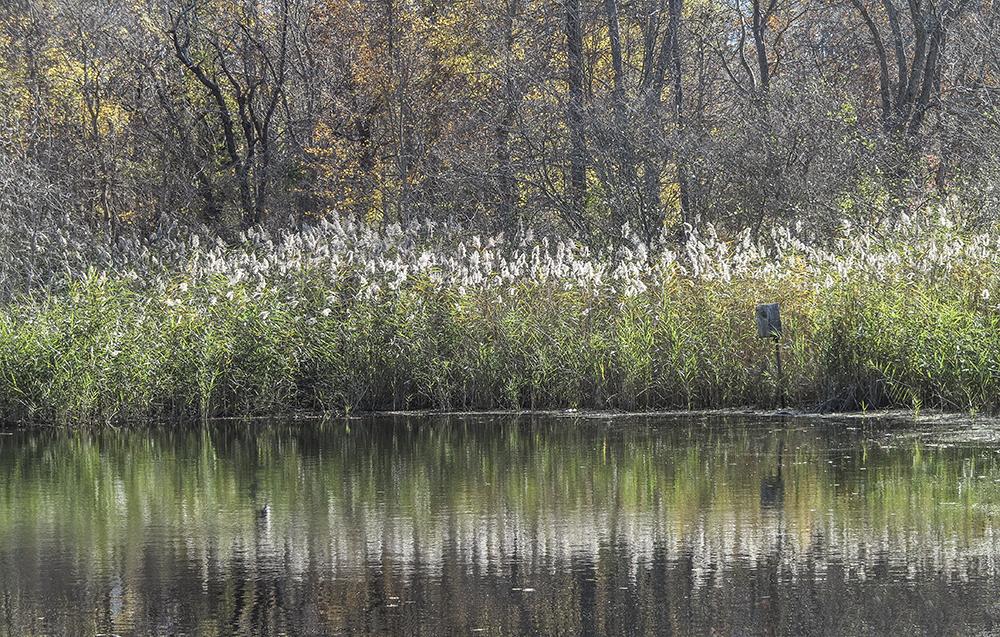 Bird Park Lake.jpg