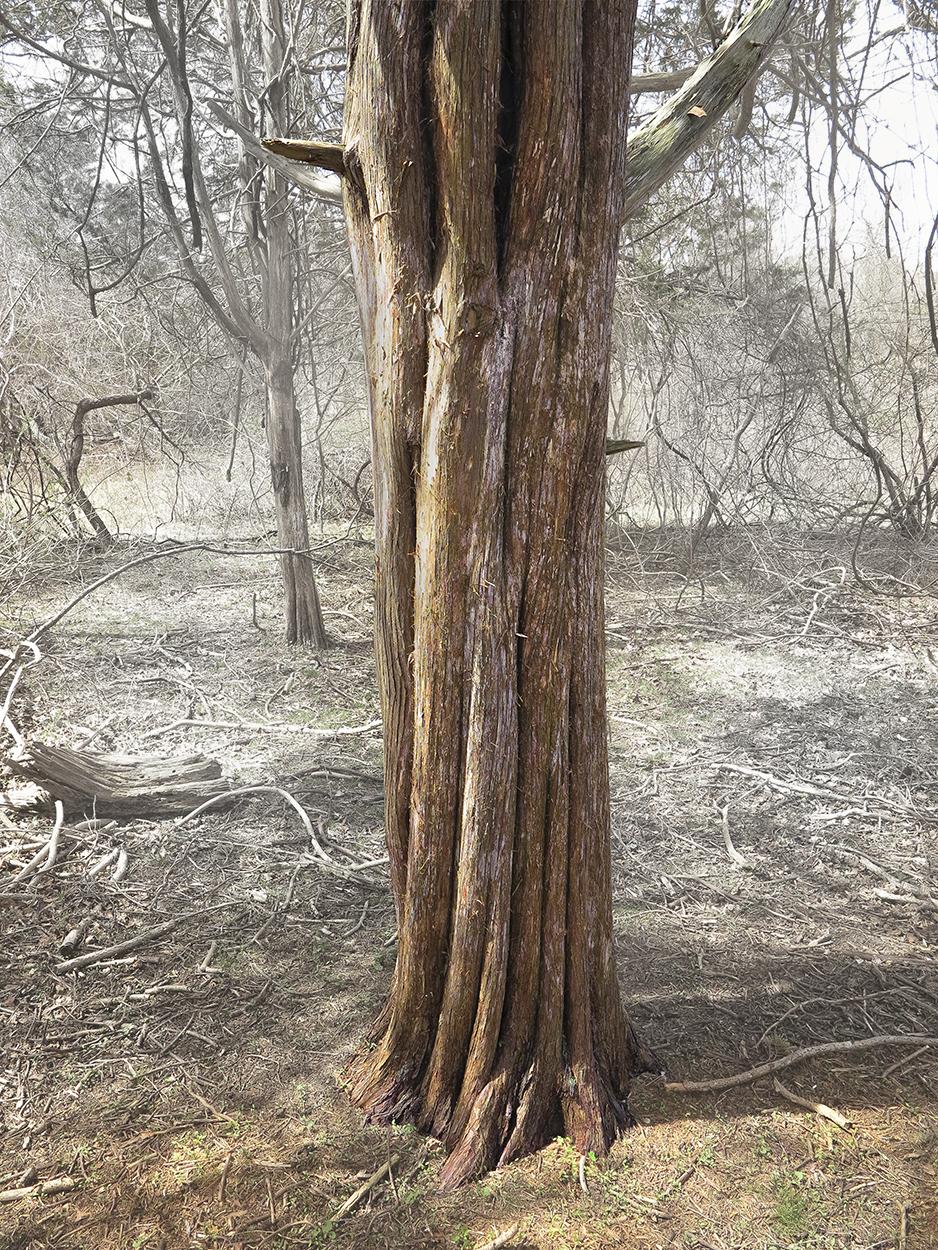 Tree Untoo The Woods.jpg