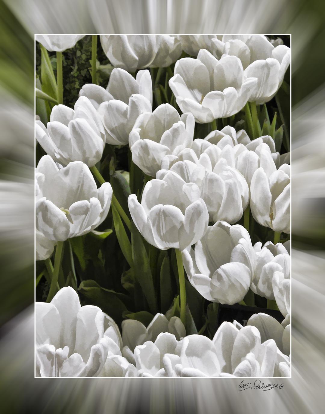 White Tulips Zoom Blurr Mat.jpg