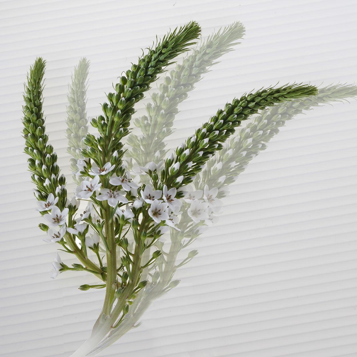 Green Plant Fad  Alt .jpg
