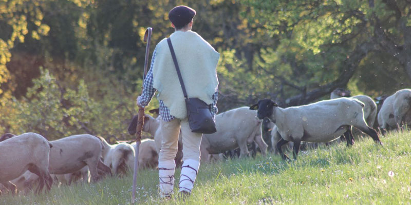 1422-Jesus-wants-to-be-your-good-Shepherd-ingress.jpg